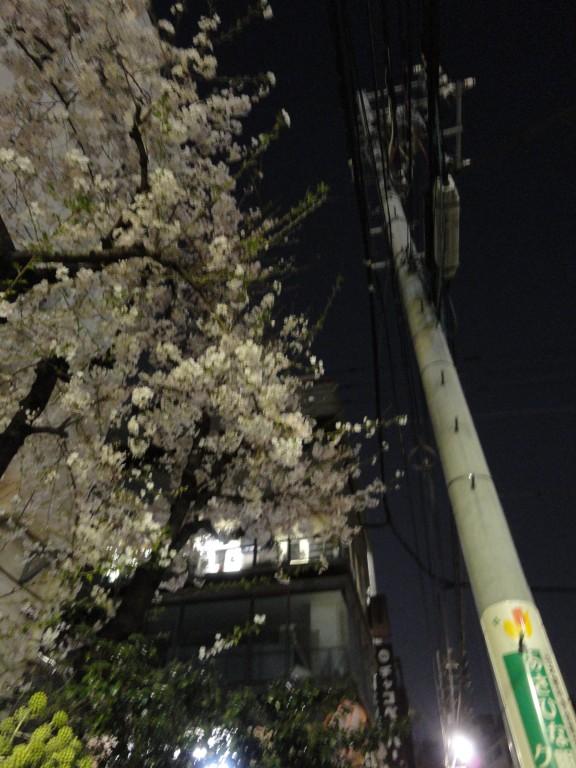 Sakura træ og elmast om aftenen i Asakusabashi, Tokyo