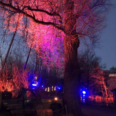 Lysaften i Odense Zoo 24/2/2018